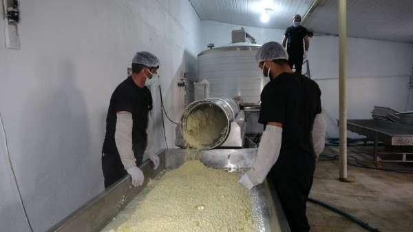 Yarım asırlık işletme, sofraları süsleyen kaşar peyniri üretiyor
