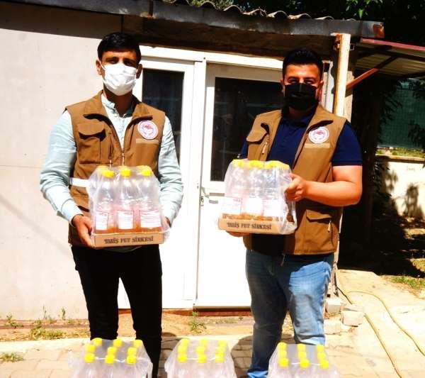 Sarıgölde kiraz üreticisini etkileyen sirke sineğiyle mücadele
