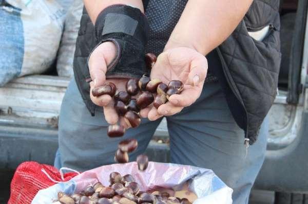 (Özel) Türkiye'nin kestane pazarı Düzce'de kuruluyor