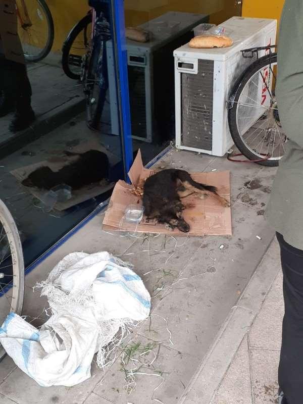Zehirledikleri sokak köpeğini poşet içinde ölüme terk ettiler