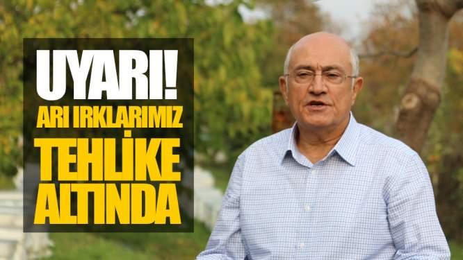 Samsun'dan Uyardı! 'Arı Irklarımız Tehlike Altında'