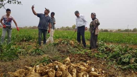 Konya Şeker'den çiftçiye 2,26 milyar TL ödeme