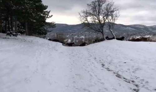 Yılkı atları Akdağ'da görüntülendi