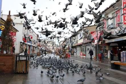 Aç kalan güvercinleri esnaf besliyor