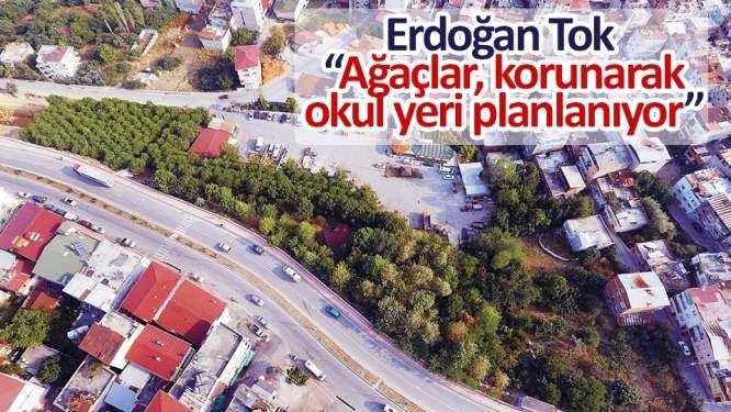 Tok, 'Ağaçlar, korunarak okul yeri planlanıyor'