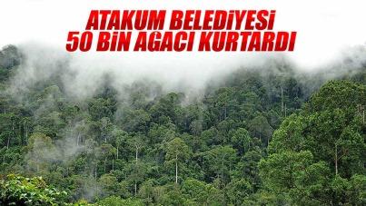 Atakum Belediyesi 50 bin ağacı kurtardı