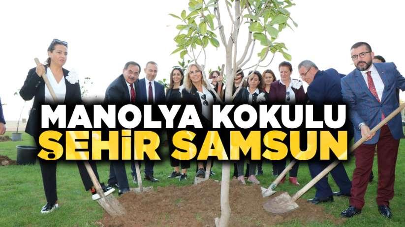 Samsun'da manolyalar toprakla buluştu