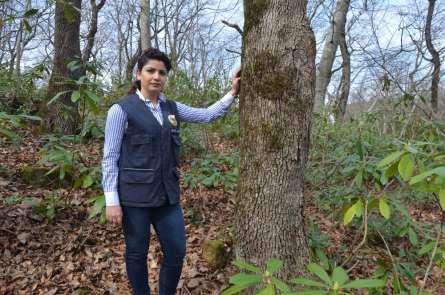 Ordu'nun ormanları kadın şeften soruluyor