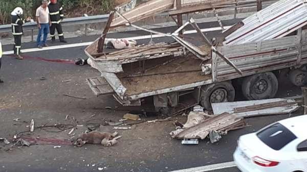 Kurbanlık yüklü tır kaza yaptı: 3 kişi yaralandı, çok sayıda hayvan telef oldu