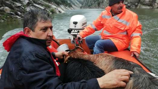 Kayalıklarda mahsur kalan keçiler botla kurtarıldı