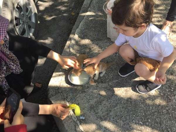 Biberonda bulunan sütle kedi yavrularını kurtardı