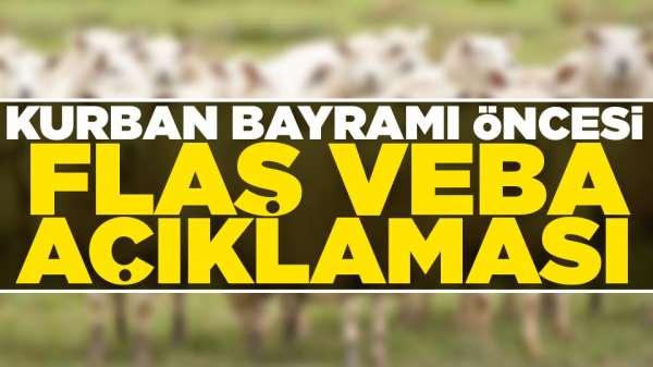 Samsun'da küçükbaş hayvanlarda görülen veba olayı ile ilgili açıklama