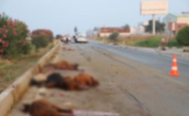 Otomobil sürüye daldı: 30 hayvan telef oldu