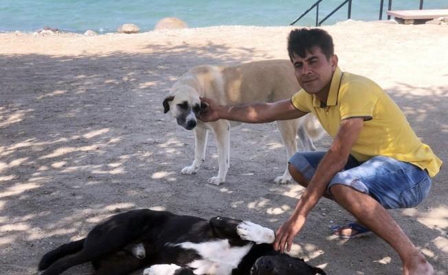 Beslediği Köpekler Hayatını Kurtardı