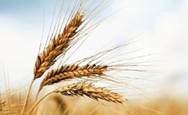 Dünya`da 1 senede üretilen gıda erken bitecek!