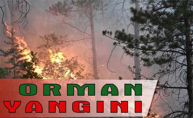 İzmir`de orman yangını