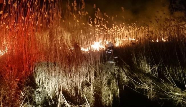 Bursa İznik'te sazlık yangını