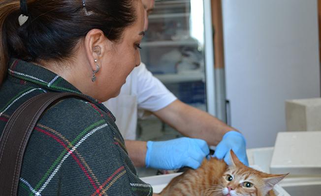 Samsun`da 22 Bin 178 Kedi Ve Köpeğe Kuduz Aşısı