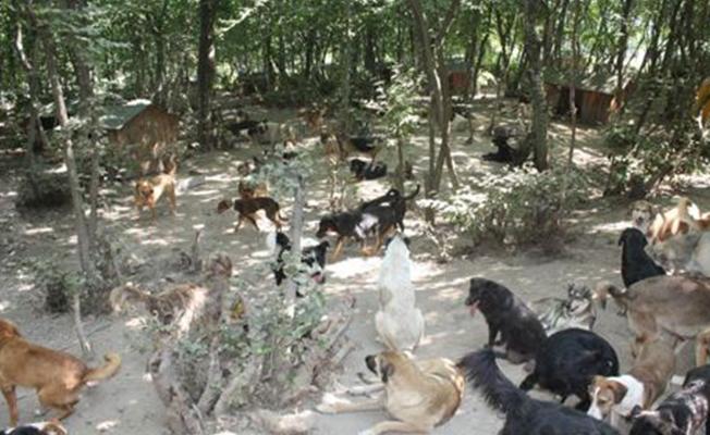 """Samsun`da """"Köpek Katliamı"""" Haberlerine İlişkin Açıklama!"""