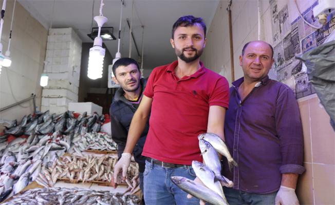 """Samsun'da Balıkçıların Yüzünü """"Lüfer"""" Güldürdü"""