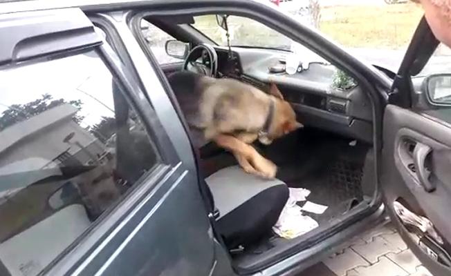 """Uyuşturucu Taciri Narkotik Köpeği """"Ece""""ye Yakalandı"""