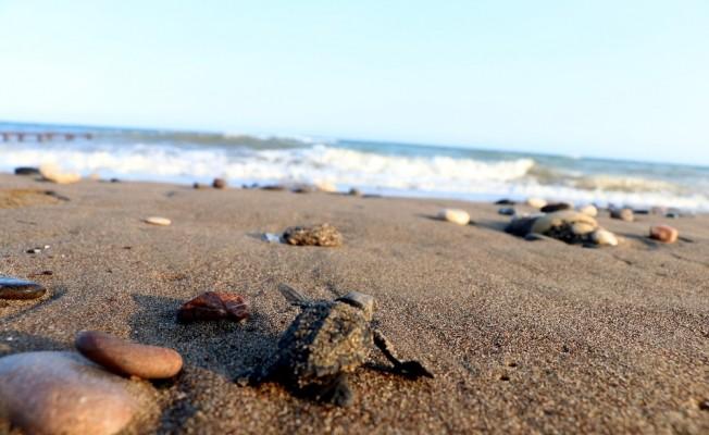 9 bin yavru denizle buluşacak