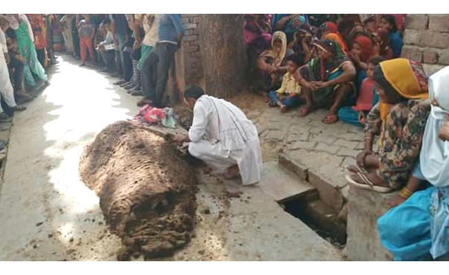 Yılan Tarafından Isırıldı, İnek Dışkısına Gömüldü