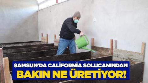 Samsun'da California solucanından bakın ne üretiyor!