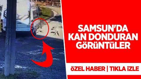 Samsun'da öğrenci servisi sokak köpeğini ezdi