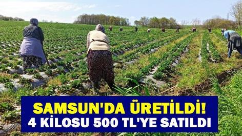 Samsun'da üretildi! 4 kilosu 500 TL'ye satıldı