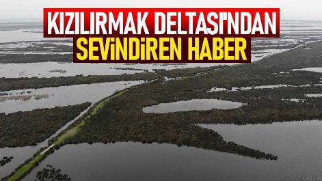 Kızılırmak Deltası'ndan sevindiren haber