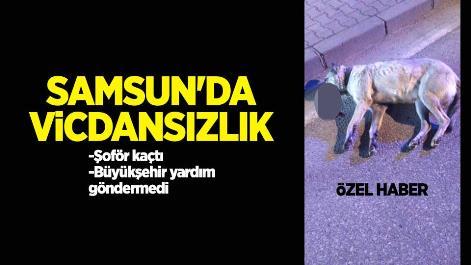 Samsun'da vicdansızlık! Çarpıp kaçtı