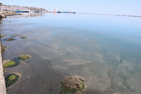 Samsun Limanı'ndaki kirlilik büyüyor