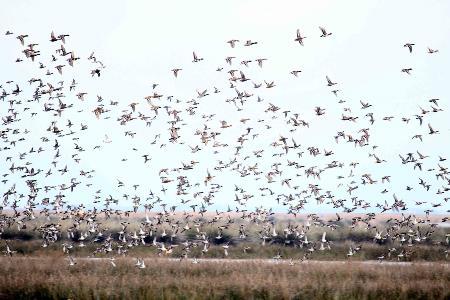 Göçmen Kuşların Sığınağı Samsun