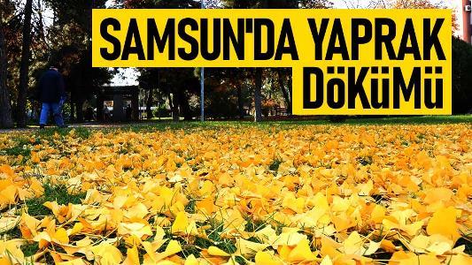 Samsun'da yaprak dökümü