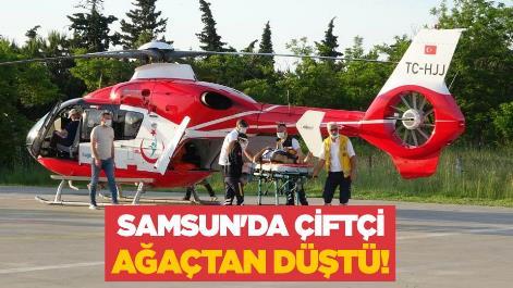 Samsun'da çiftçi ağaçtan düştü!