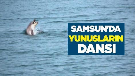 Samsun'da yunusların dansı